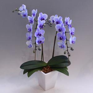 purple 2F